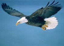 Притча дня: Орел и Ракушка - 2