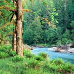 Медитация: Звуки живой природы