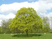 Счастье видеть - уроки дерева