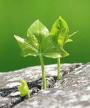 Настойчивость и зона роста