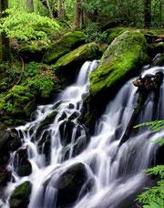 Какую воду лучше пить – ручей