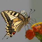 Притчи короткие в картинках: Рождение бабочки