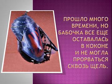 Притчи короткие: Рождение бабочки – 2