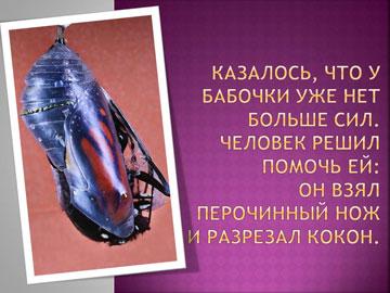 Притчи короткие: Рождение бабочки – 3