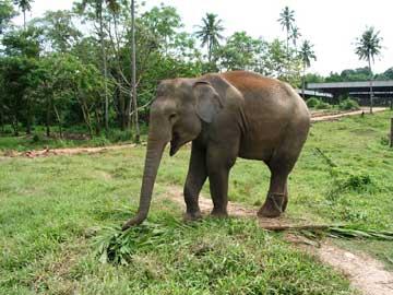 Шри-Ланка - Вы посмотрите, что я нашел!