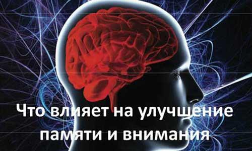 Что влияет на улучшение памяти и внимания